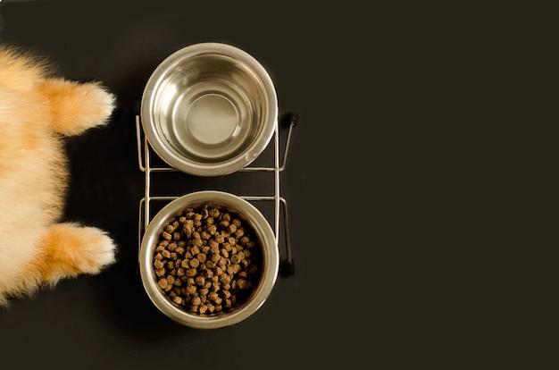Patas de cachorro ou gato e tigela com comida seca e água Foto Premium