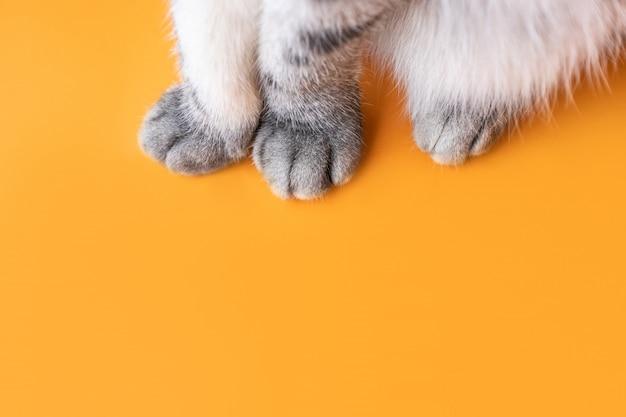 Patas de um gato cinzento em um fundo laranja. Foto Premium