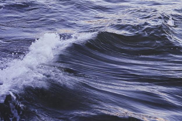 Pato azul branco nadando em um mar azul escuro ondulado Foto gratuita
