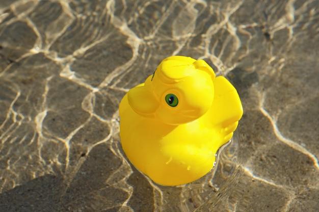 Pato de brinquedo na piscina Foto Premium