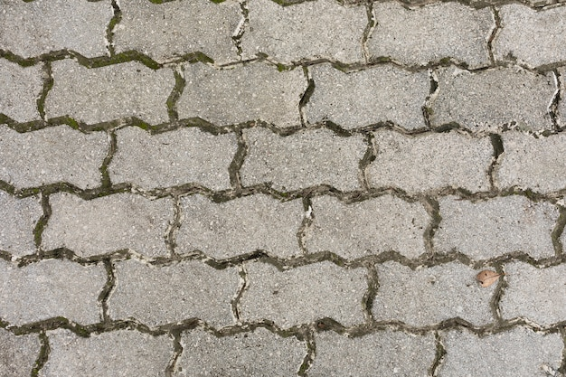 Pavimento com musgo e terra Foto gratuita