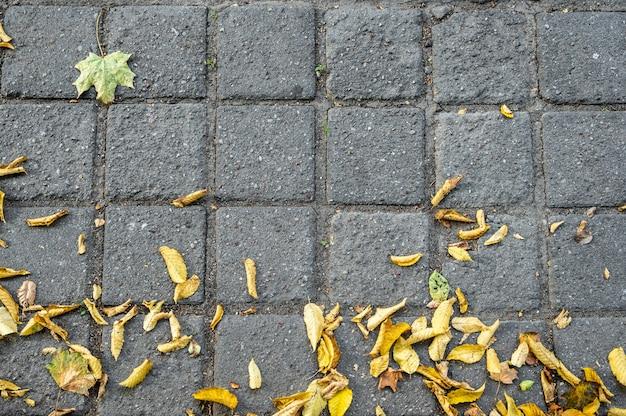 Pavimento de paralelepípedos com folhas de outono amarelas estendidas sobre ele Foto Premium