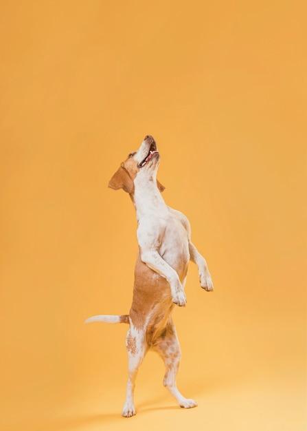 Pé de cachorro engraçado nas patas Foto gratuita