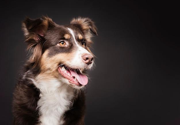 Pé de cachorro fofo com espaço de cópia Foto gratuita