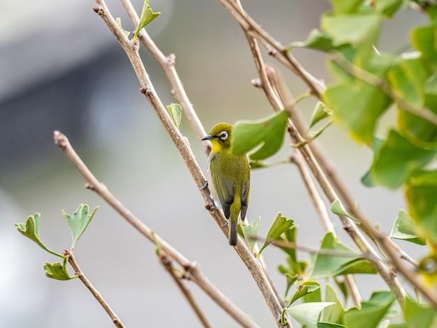 Pé de pássaro exótico bonito em um galho de árvore no meio de uma floresta Foto gratuita