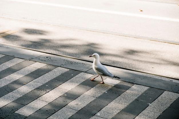 Pé de pássaro no caminho Foto gratuita