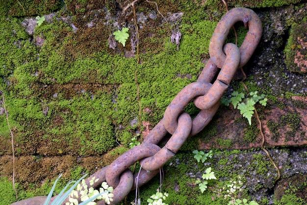 Pedaço de corrente de ferro pendurado na parede musgosa do jardim Foto Premium