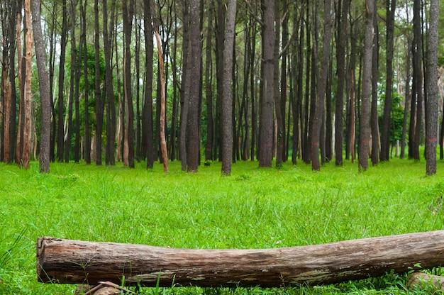 Pedaço de madeira na floresta na grama verde Foto Premium