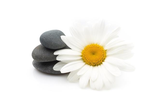 Pedras de spa e flor de margarida Foto Premium