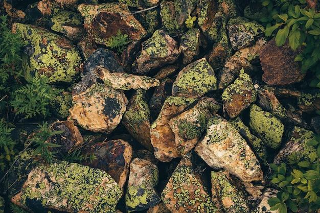Pedras texturizadas cobertas de musgos e líquenes são espalhadas caoticamente. vista de cima. Foto Premium