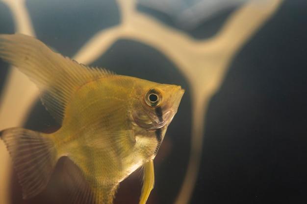 Peixe betta close-up e poluição de plástico no fundo Foto gratuita