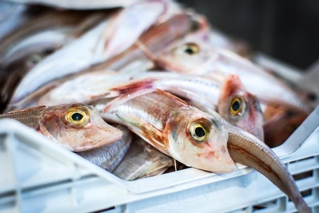 Peixe brilhante no mercado de peixe Foto gratuita