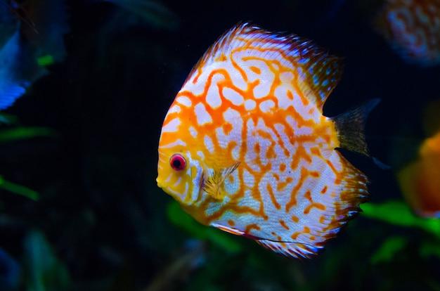 Peixe de recife de coral laranja Foto Premium