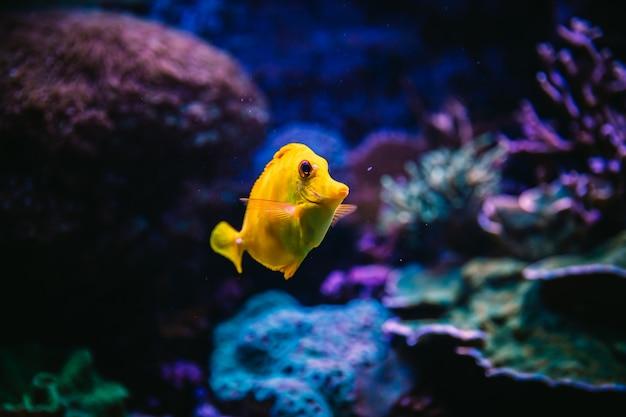 Peixe dentro de um aquário Foto Premium