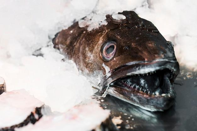 Peixe fresco em cubos de gelo para venda no mercado Foto gratuita