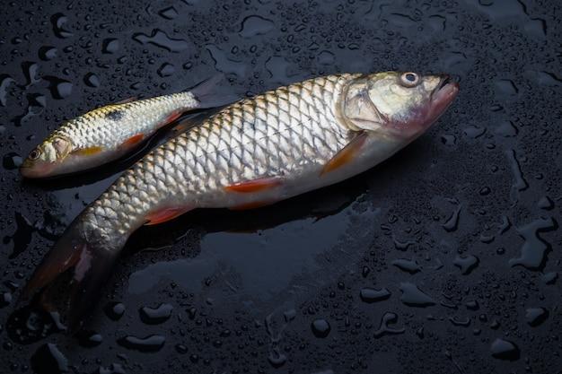 Peixe fresco na mesa preta molhada Foto Premium