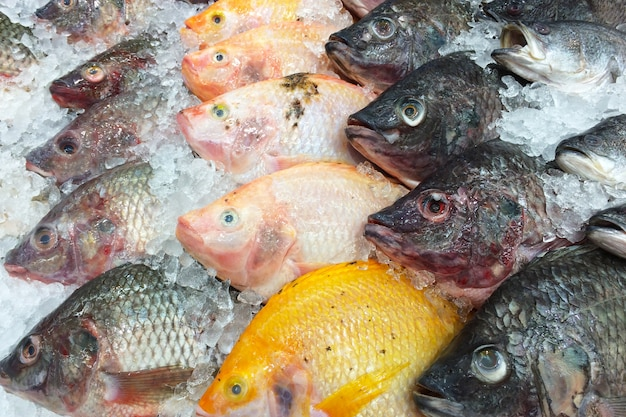 Peixe fresco na prateleira de gelo. Foto Premium