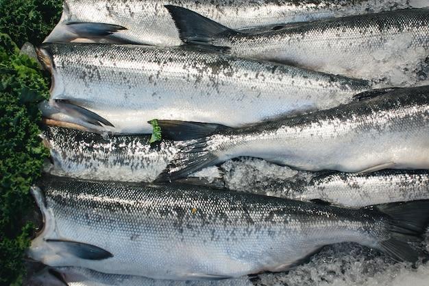 Peixe prateado à venda no mercado de peixe Foto gratuita