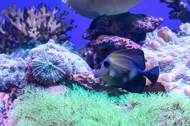 Peixes coloridos no fundo do mar o coral, tailândia. Foto Premium