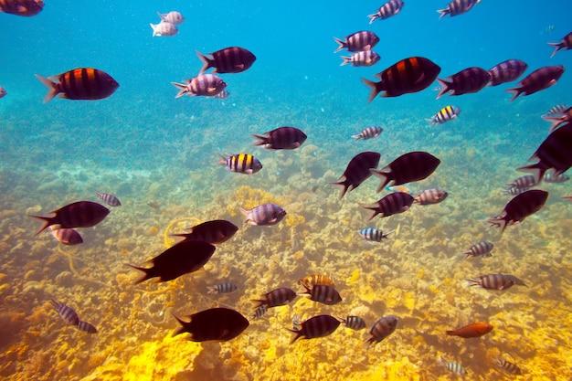 Peixes na área de recifes de coral Foto gratuita