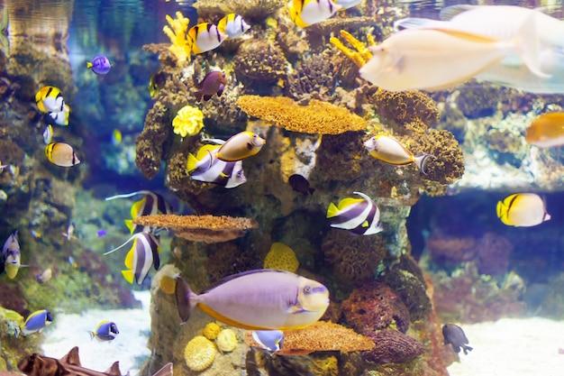 Peixes tropicais na área de recifes de corais Foto gratuita