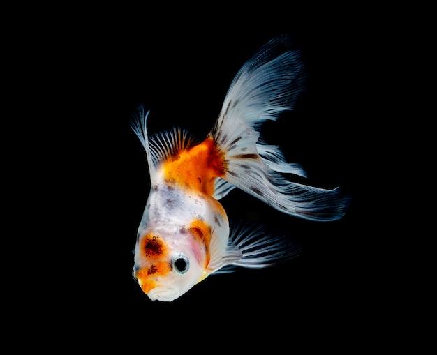 Peixinho isolado em preto escuro Foto Premium