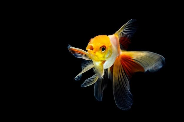 Peixinho isolado em um preto escuro Foto Premium
