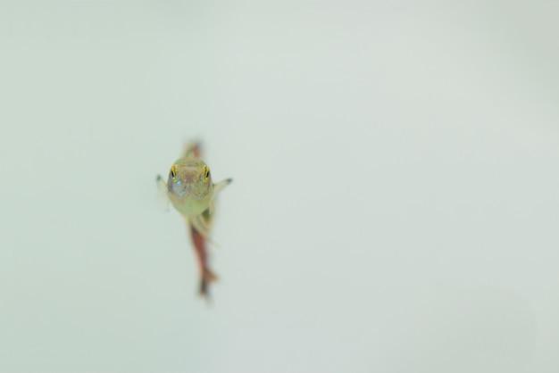Peixinhos no aquário ou aquário Foto Premium
