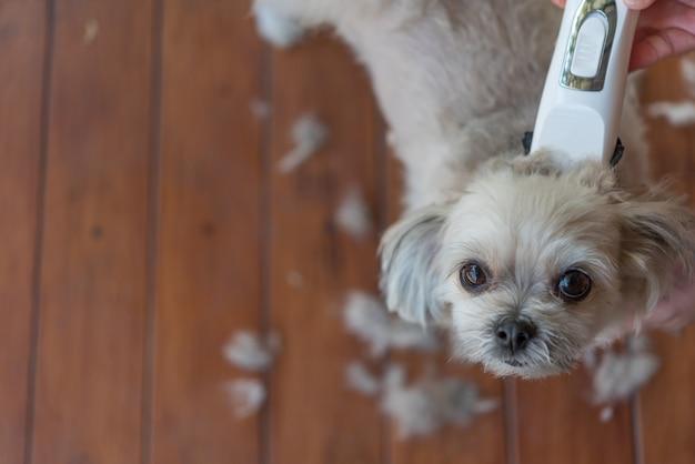 Pele de cão de corte e corte de cabelo humano com clipper Foto Premium