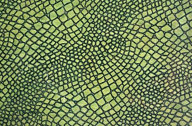 Pele de cobra verde Foto Premium