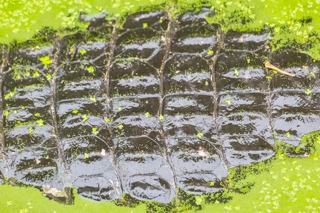 Pele de textura de crocodilo com fundo de água Foto Premium