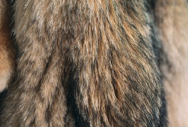 Pêlo de animal. raposas, guaxinim, lobo, castor, marta, nutria pendurado após o processamento. Foto Premium