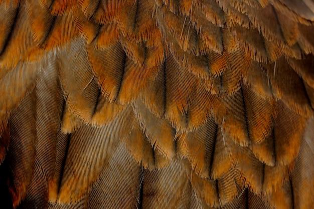 Pena de papagaio negro pariah kite milvus migrans Foto Premium
