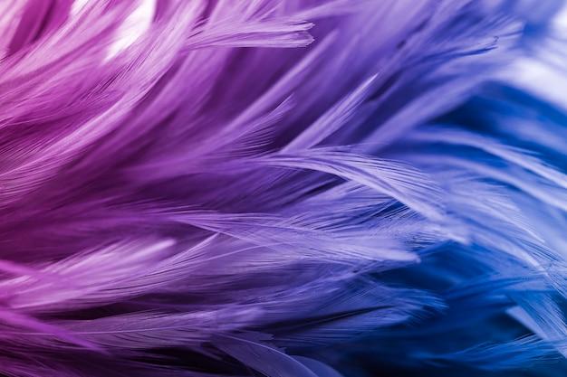 Penas de frango colorido no estilo suave e borrão para o fundo Foto Premium