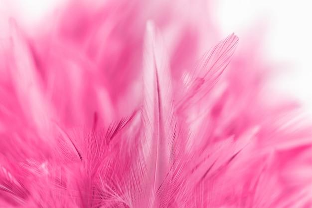 Penas de frango rosa em suave e estilo borrão para plano de fundo Foto Premium