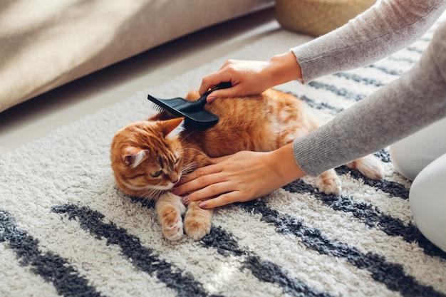 Penteando o gato ruivo com escova de pente em casa. dono de mulher cuidando do animal de estimação para remover o cabelo. Foto Premium