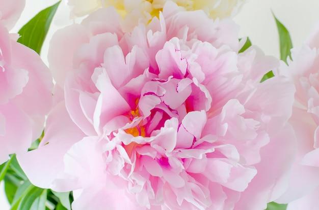 Peônia rosa close up Foto Premium