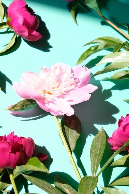 Peônias rosa e folhas com sombra dura. padrão na moda, conceito de verão. Foto Premium