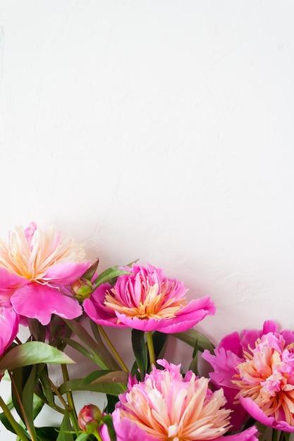 Peônias rosa sobre fundo branco Foto Premium