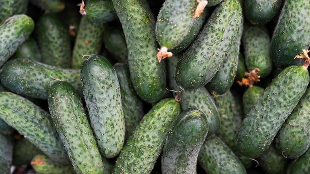 Pepinos, legumes orgânicos frescos Foto Premium
