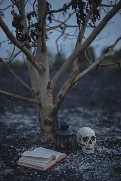 Pequena árvore com livro de feitiços e caveira para a noite de halloween Foto gratuita