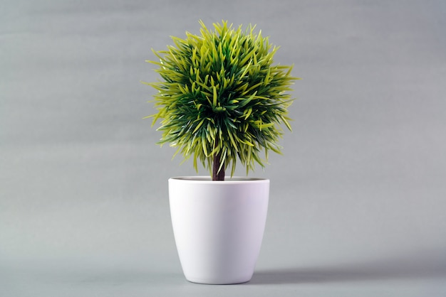 Pequena árvore decorativa em fundo cinza Foto Premium