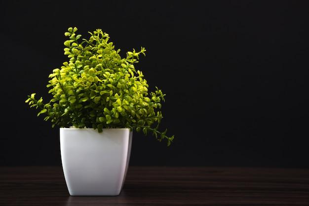 Pequena árvore decorativa Foto Premium