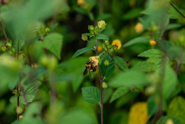 Pequena flor amarela Foto Premium