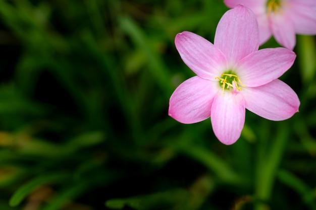 Pequenas flores cor de rosa na folhagem verde Foto Premium