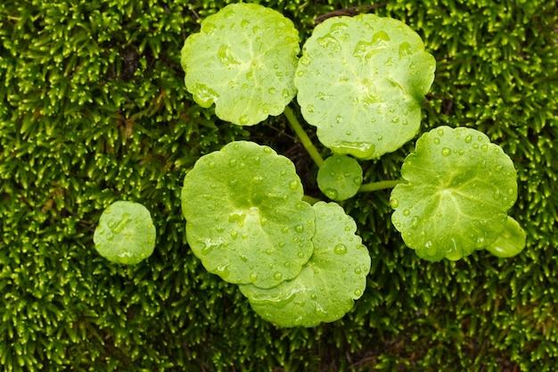 Pequenas plantas no chão da floresta Foto Premium