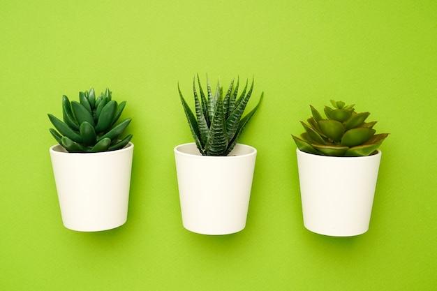 Pequenas plantas suculentas em uma composição simples verde e mínima Foto Premium