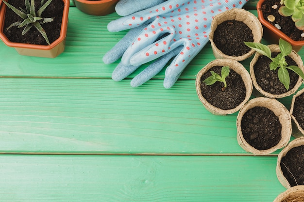 Pequenas plantas suculentas estão prontas para transplante close-up na madeira Foto Premium