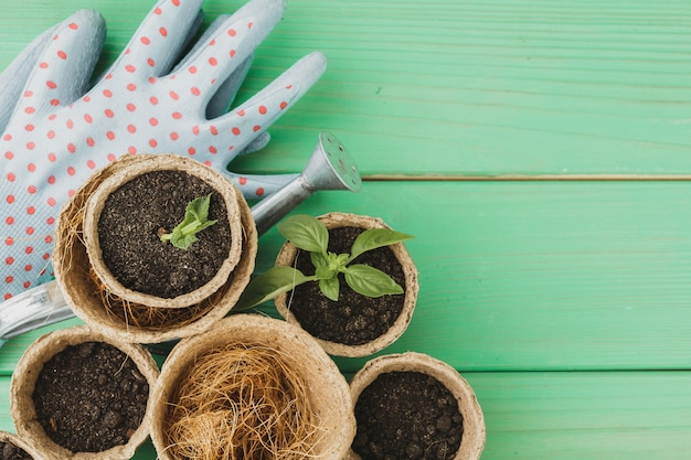 Pequenas plantas suculentas estão prontas para transplante close-up na superfície de madeira Foto Premium