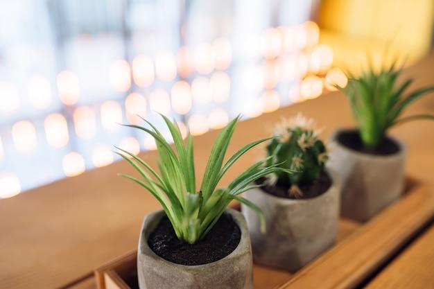 Pequeno cacto e babosa em pequenos vasos Foto gratuita